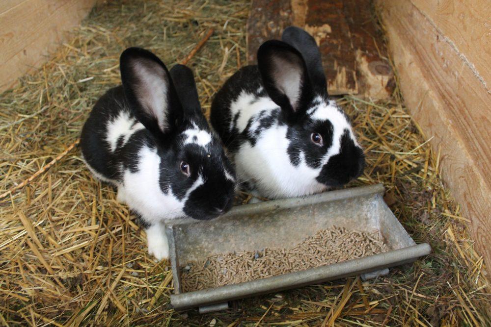Kaninchenbraten und mehr